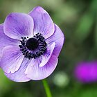Large Purple Anemone by Anthony  Poynton