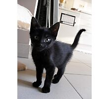 Black kitten Photographic Print