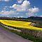 COUNTRY ROADS thru FARMING CROPS!