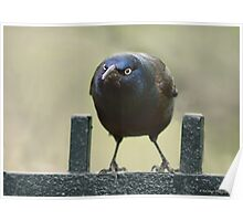 That Grackle Look Poster