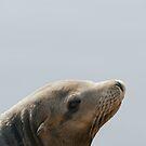 Sea Lion by Vac1