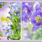 Collecting Columbine... by LindaR