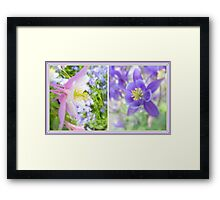 Collecting Columbine... Framed Print