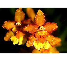 Hybrid Cattleya Orchid Photographic Print