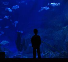Boy staring into a giant marine aquarium. by Colin Munro