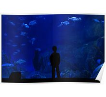 Boy staring into a giant marine aquarium. Poster