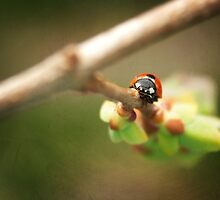 Ladybug on a Lilac Branch by Tamara Brandy