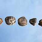Pebbles and Sky Reflection by Natalie Kinnear