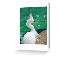 Punk Rock BIrd Greeting Card