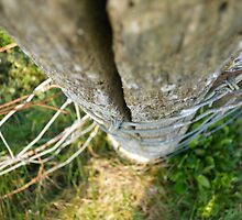 Wood and Wire by Catinabucket