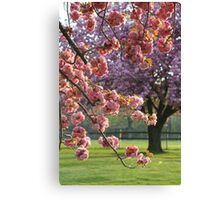 Pink Point of View Canvas Print