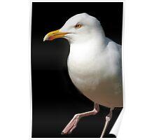 Dancing Seagull Poster