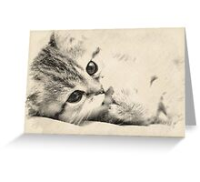 Kitten Greeting Card