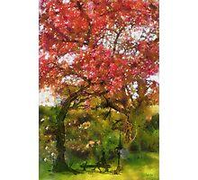 My Appletree - Edegem - Belgium Photographic Print