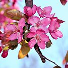 Tree Blooms by anchorsofhope