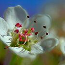 Desert Spring Blooms of Northern Nevada  by SB  Sullivan
