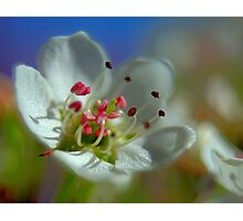 Desert Spring Blooms of Northern Nevada  Photographic Print