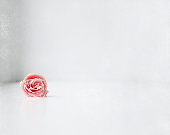 simple and pink by Ingrid Beddoes