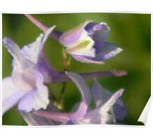 Soft Impressions, Colorful Prairie Larkspur Poster