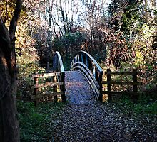 Old bridge in park by Magdalena Warmuz-Dent