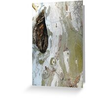 Sycamore wound Greeting Card