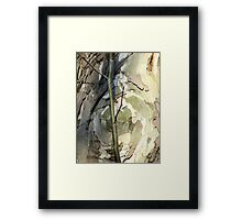 Sycamore sprout Framed Print