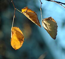 Autumn leaves by Magdalena Warmuz-Dent