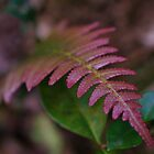 Forest Fern by Liz Worth