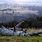 West of West Belconnen in Canberra. by shortshooter-Al