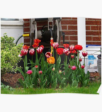 Fun tulip garden Poster