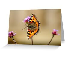 Small Tortoiseshell Butterfly (Aglais urticae) Greeting Card