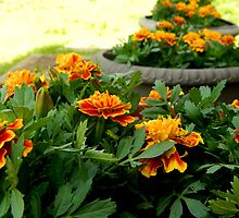 Garden of Sunshine ^ by ctheworld