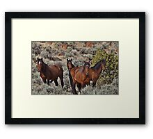 Wild horses of Palomino Valley  #6 Framed Print