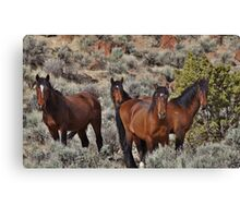Wild horses of Palomino Valley  #6 Canvas Print