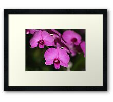 Purple Power: Moth Orchid or Phalaenopsis Framed Print