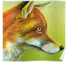 Portrait of a fox Poster