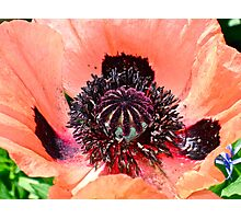 """""""Floral Pattern"""" Photographic Print"""