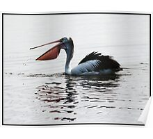 Pelican with Open Bill Poster