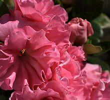 Pink IT... by Joy Watson