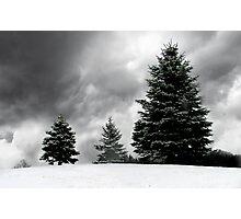 Evergreen everblack everwhite Photographic Print