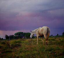 Stormy Grey by Penny Kittel