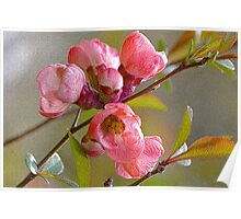 Pink Blossom With Texture Poster