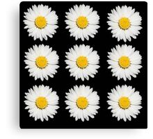Nine Common Daisies Isolated on A Black Background Canvas Print