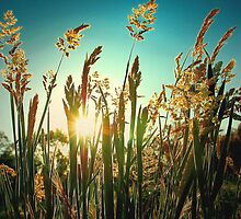 Golden moment.. by Basia McAuley