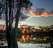 Down By The Billabong  by mspfoto
