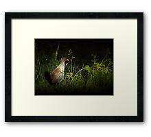 Tasmanian Native Hen Framed Print