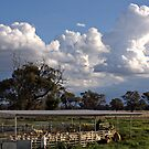 Drenching the Sheep Under a Big Sky by Julie Sleeman