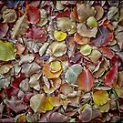 Carpet of Colour by Barb Leopold