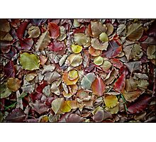 Carpet of Colour Photographic Print