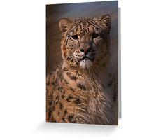 Snow Leopard Portrait v2 Greeting Card